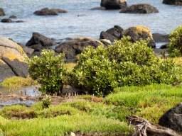Mangroves at Jawbone Marine Sanctuary