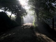 Camino Pilgrims hiking into the morning Fog