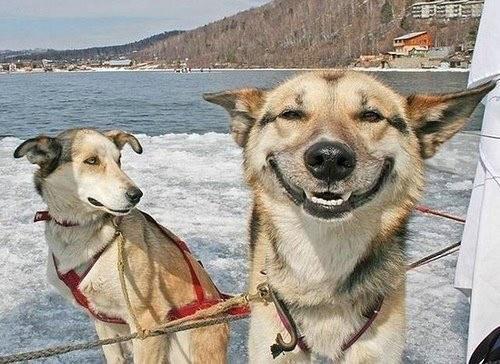 the-original-stoner-dog