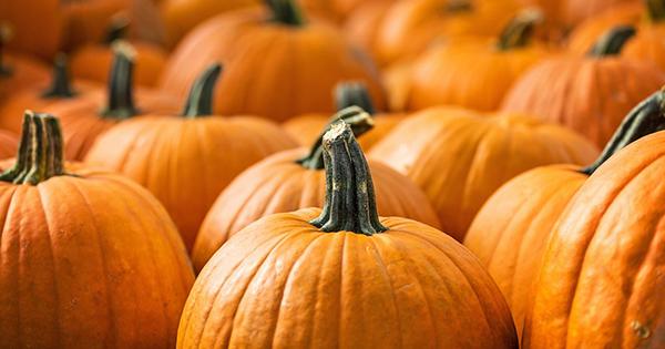 pumpkins recycling halloween sodc