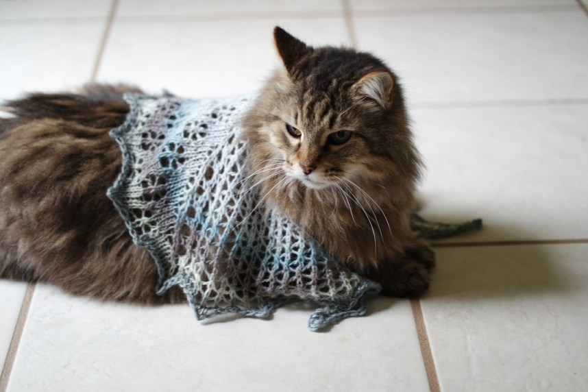 A tabby cat wearing a knitted lace shawl lying a tile floor.