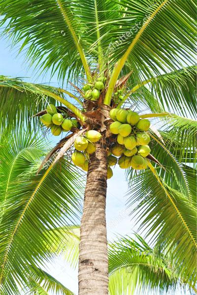 Trees in Kerala | Different Species of Trees | Kerala | Kerala