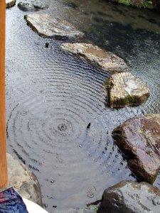 Teich in Japanischem Garten