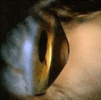 Rigid gas permeable contact lenses