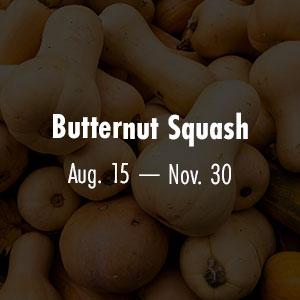 Butternut Squash Aug 15 - Nov 30