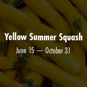 Yellow Summer Squash June 15 - October 31