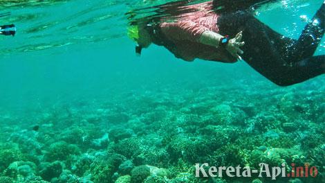 Menyelam lebih dalam, melihat kecantikan dasar laut