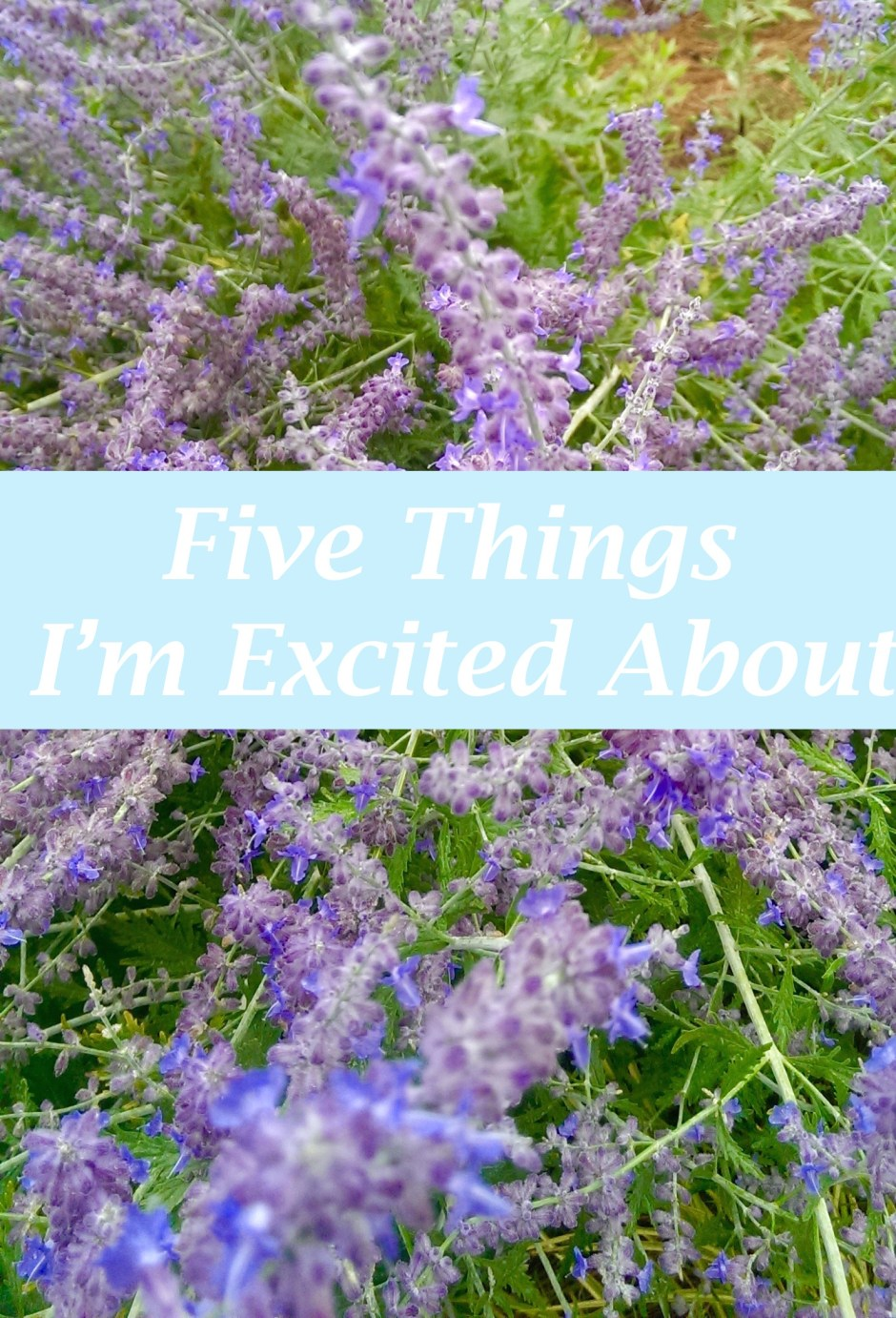 Five things to get excited about with flowers