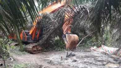Photo of Gawat!!! Ada Gudang Penampungan Minyak Ilegal di Desa Kilangan