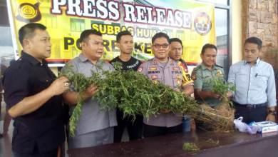 Photo of 15 Jam Sisir Kawasan TNKS, Polres Kerinci Temukan Lebih 1000 Batang Ganja