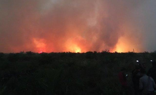 Kebakaran Hutan Riau Semakin Meluas