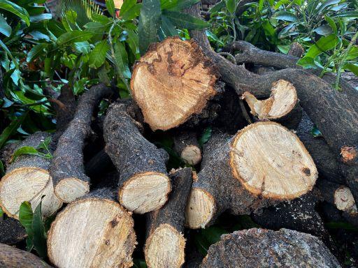 mango wood sustainable furniture kernig krafts