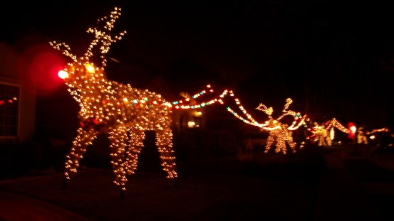 Reindeer Christmas display in Northern California.
