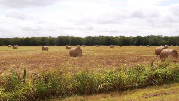 Round bales in the field.