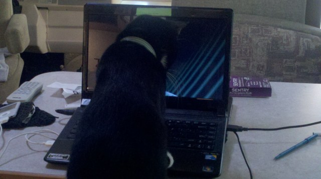 Pye trying to catch the screen saver. Cute, not bright.