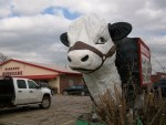 Here's Bessie the Sirloin Stockade Cow.