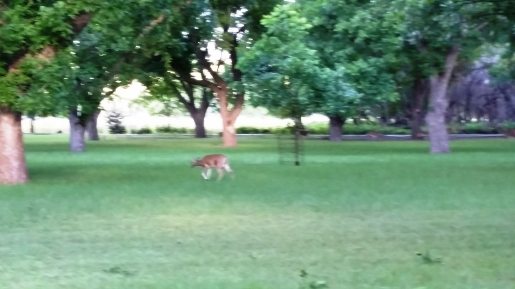 A fuzzy picture of a deer.