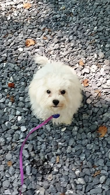 Button. She may look like a puppy, but she's closer to a cross between an over-caffienated bunny and a cotton ball.