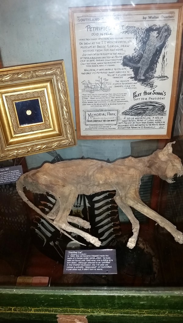 A petrified cat. Was it scared to death?