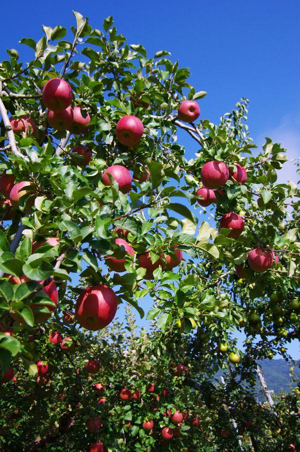自然へカエル・・・: 林檎の樹の下の陶蕓展
