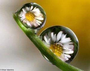 flowersDM3007g_468x368