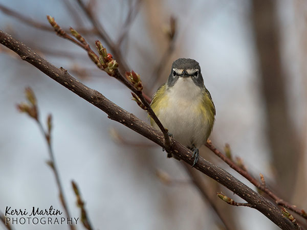 Wildlife photography in Southern Ontario