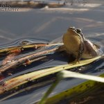 Re-igniting my child-like wonder: It all started with frogs…