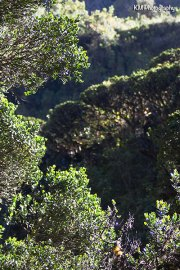 Inca Trail Day 2
