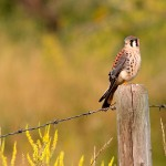 Alberta Wildlife Photography Highlights – 2014 Year in Review