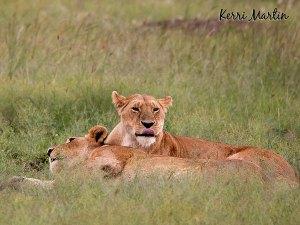 The Maasai Mara Reserve, Kenya