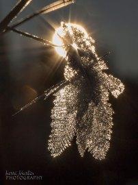 Snow flake crystal