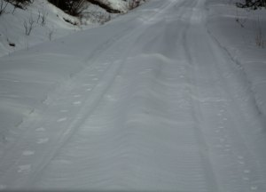 Wolf tracks (left); coyote tracks (right)