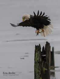 EagleTake Off