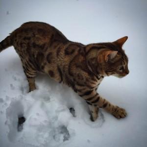 tigger_snow