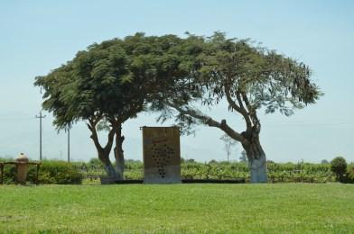 Trees at Tacama