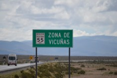 Vicuña Crossing