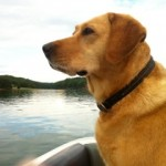 All I Really Need to Know About Success I Learned From My Labrador Retriever