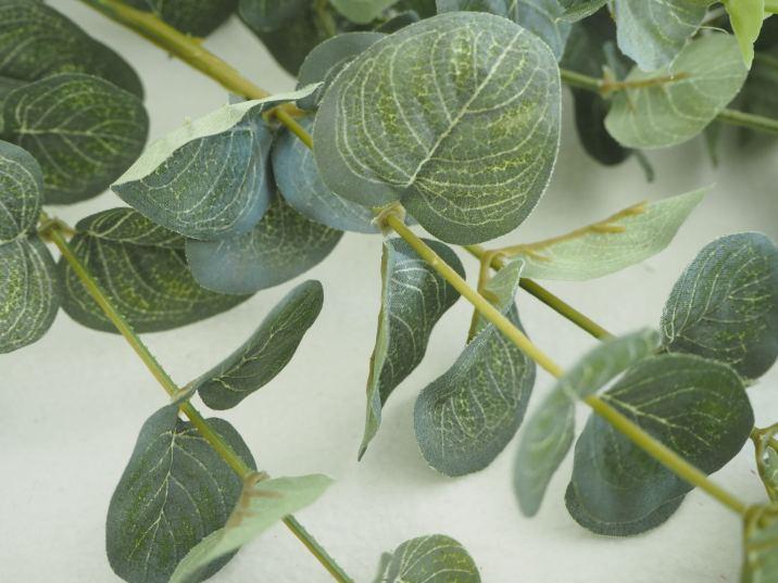 Eucalyptus stems