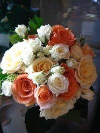 peach & cream rose bQ.