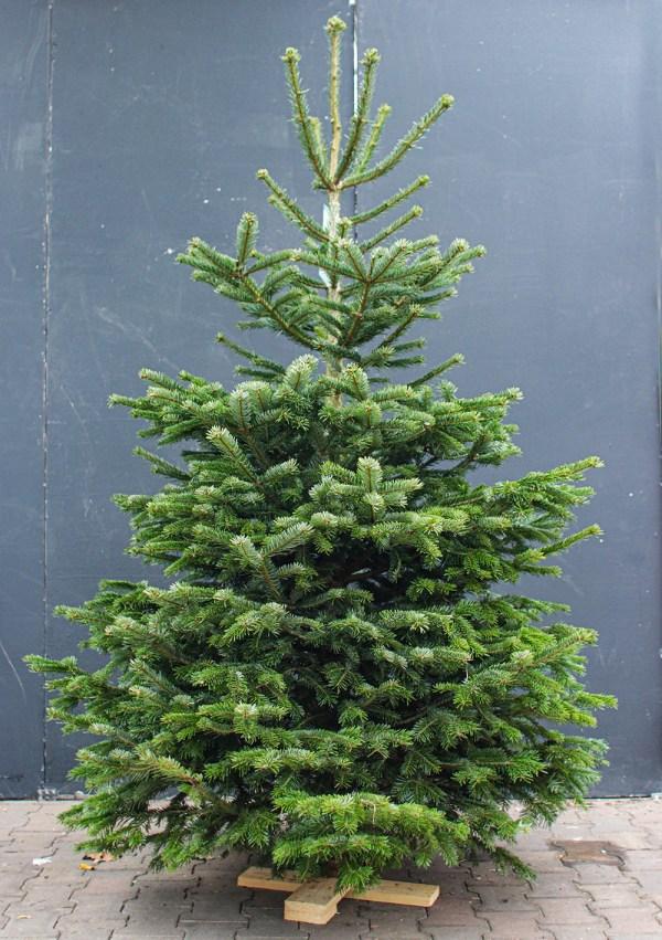 Kerstboombezorging.nl Nordmann bestellen thuis bezorgen
