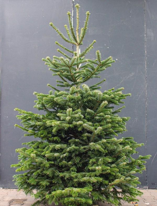 Nordmann kerstboom met kluit bezorgen nijmegen