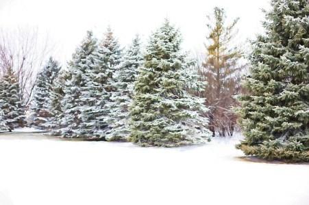 Zelf kerstboom zagen
