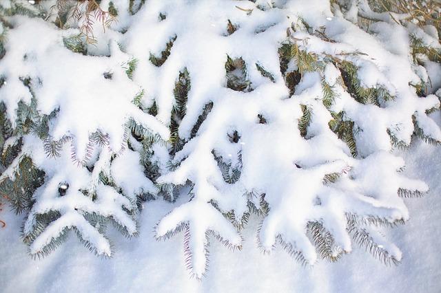 Kerstboom met sneeuw