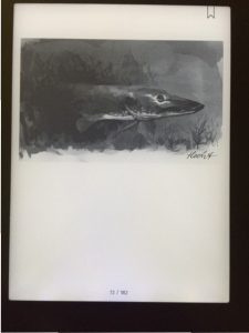 Raubfisch Illustration
