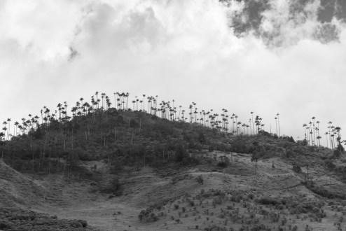 Salento-Valle del Cocora Colombia Southamerica_Travel_Kerstin Musl_06