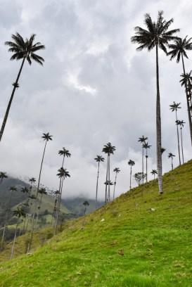 Salento-Valle del Cocora Colombia Southamerica_Travel_Kerstin Musl_26