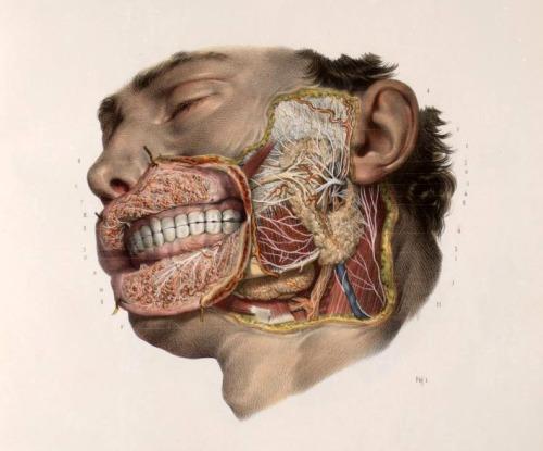 human body naturalist draw