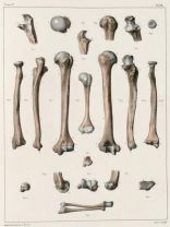 human-body-vintage-scientific-illustration-naturalist-drawing-0004