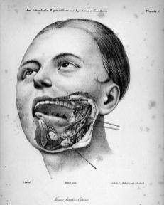 human-body-vintage-scientific-illustration-naturalist-drawing-0031