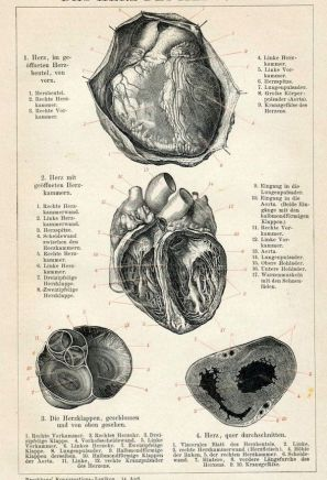 human-body-vintage-scientific-illustration-naturalist-drawing-0040